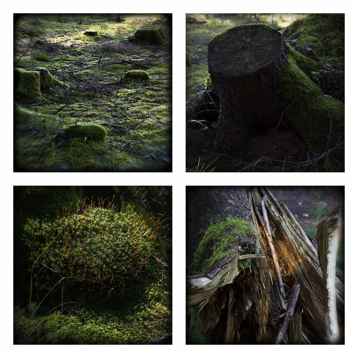 MAGIC FOREST X