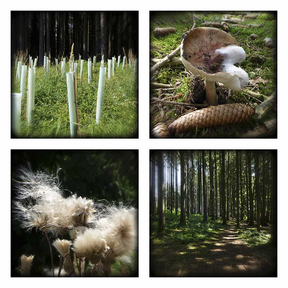 MAGIC FOREST XIV