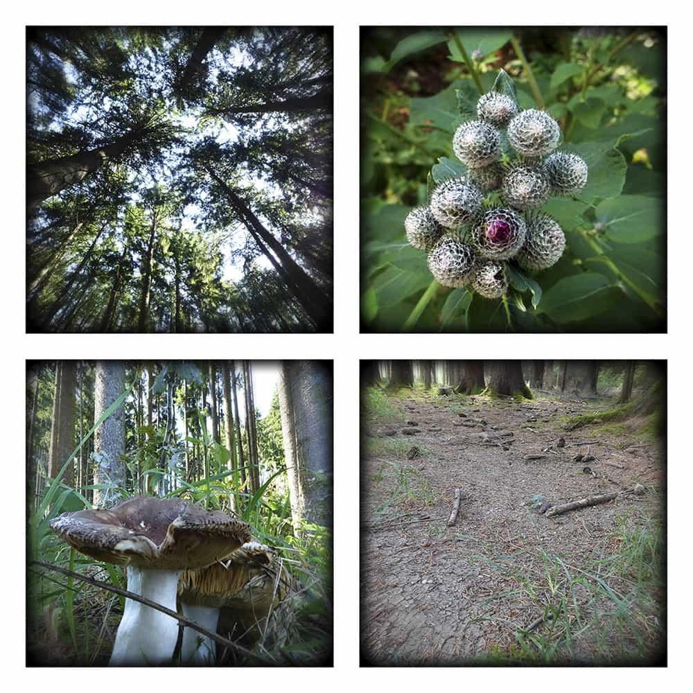 MAGIC FOREST XVI