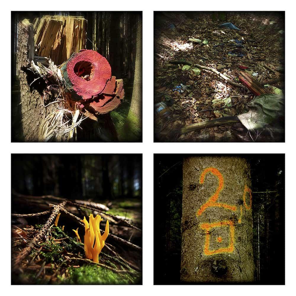 MAGIC FOREST XVII
