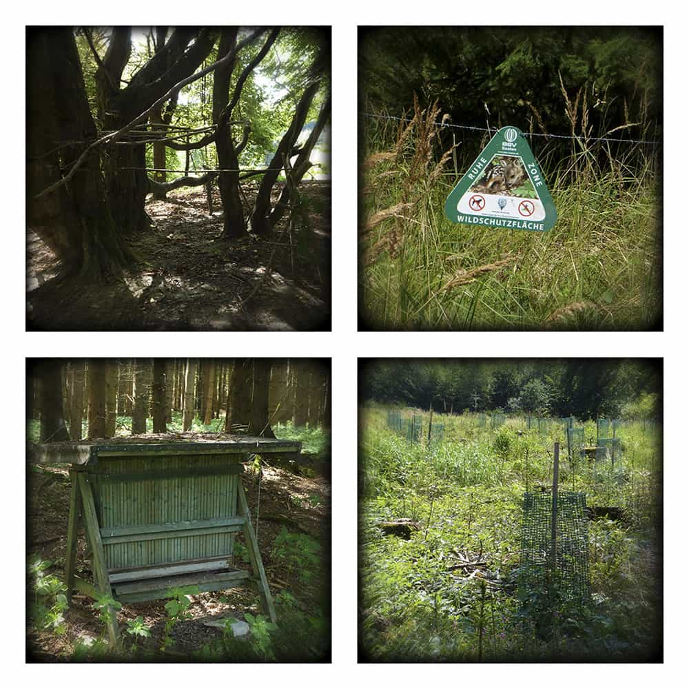 MAGIC FOREST XVIII
