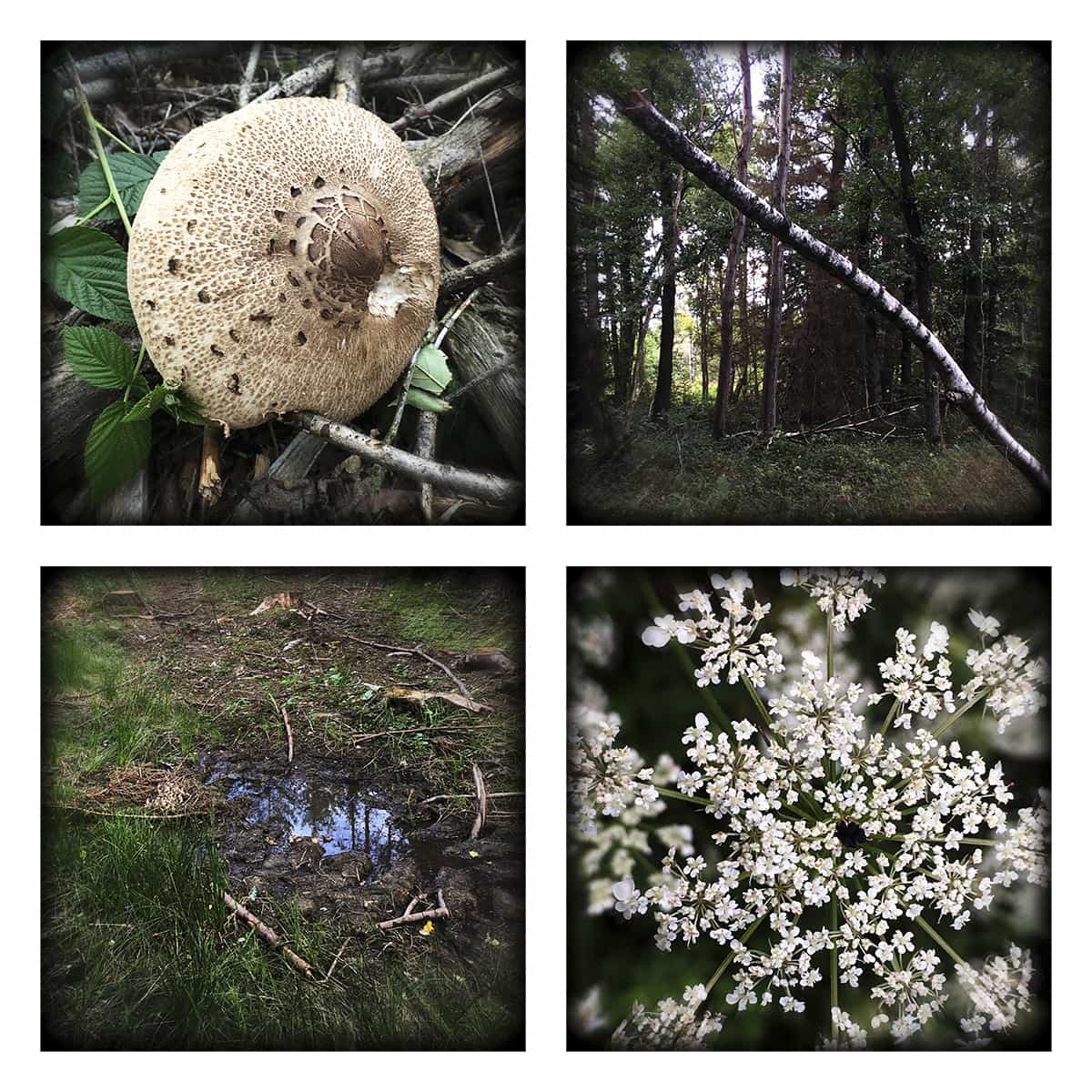 MAGIC FOREST XXI
