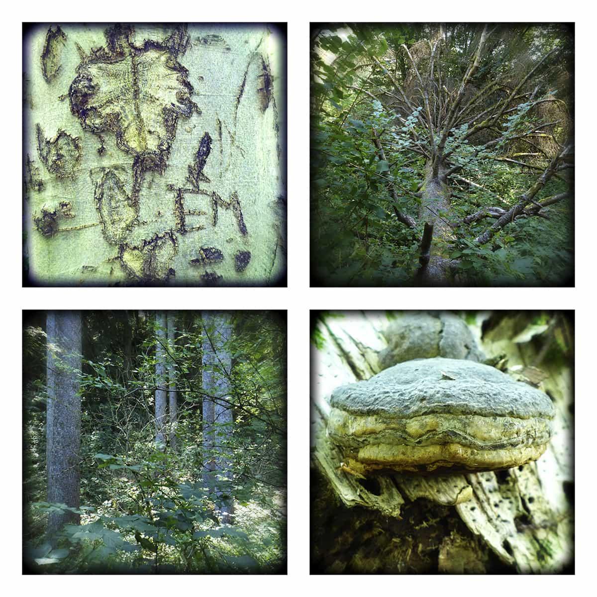 MAGIC FOREST XXIV