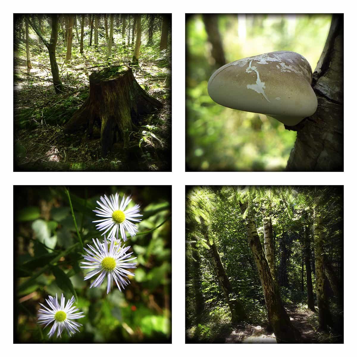 MAGIC FOREST XXV