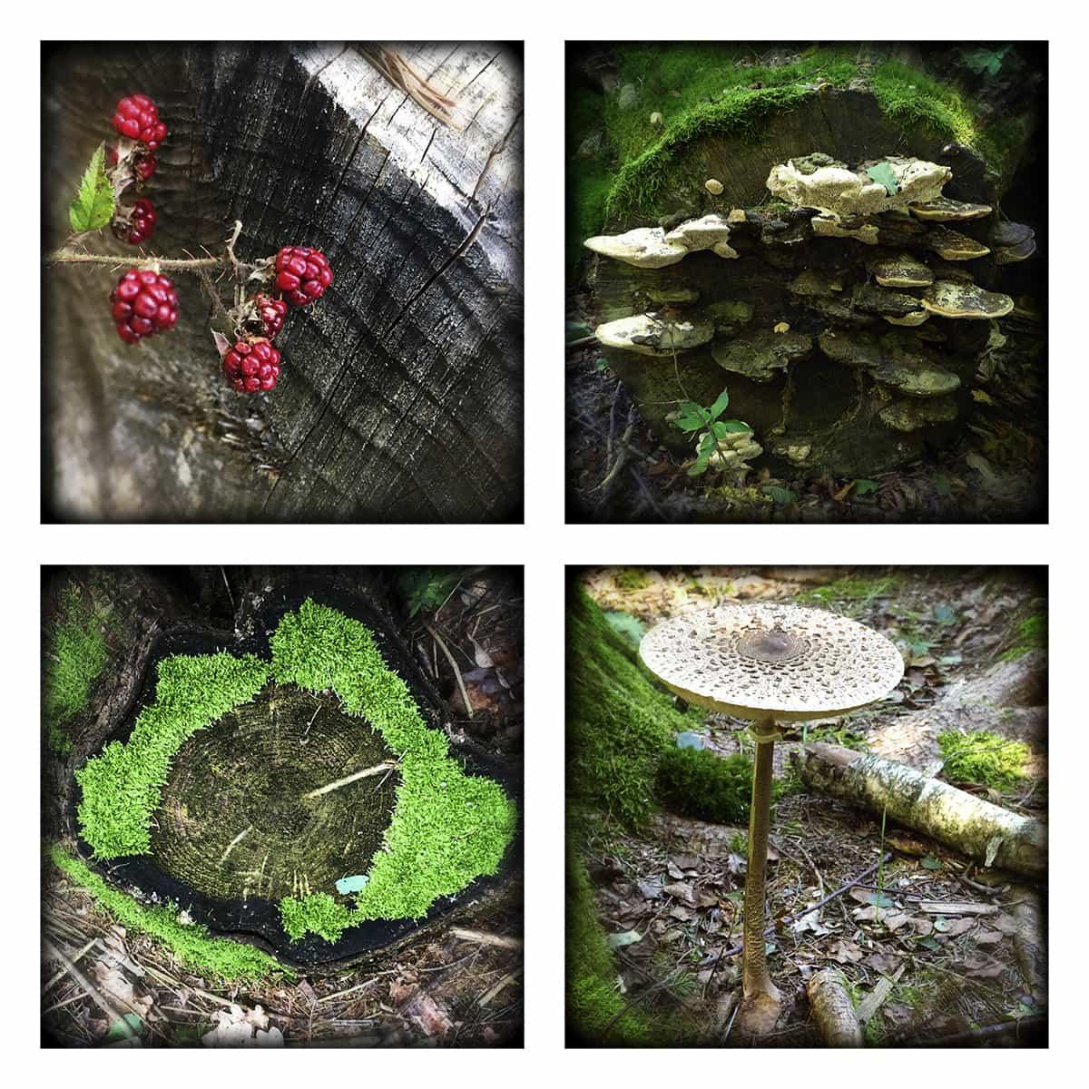 MAGIC FOREST XXVI