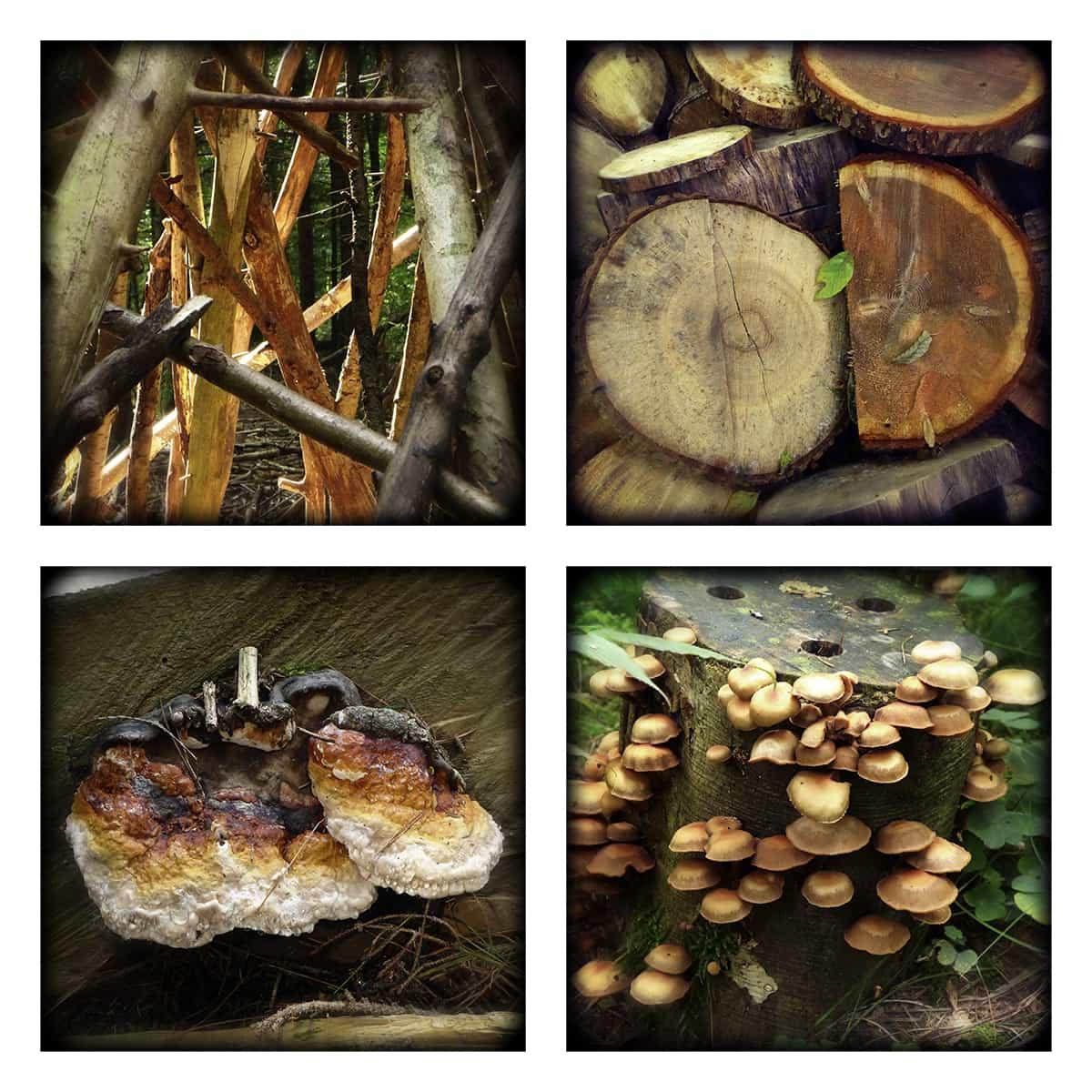 MAGIC FOREST XXVII