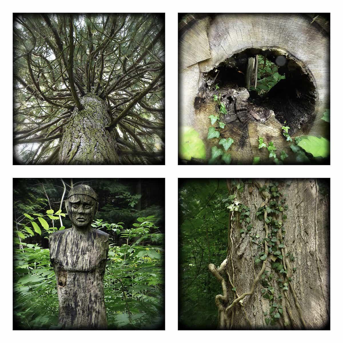 MAGIC FOREST XXVIII