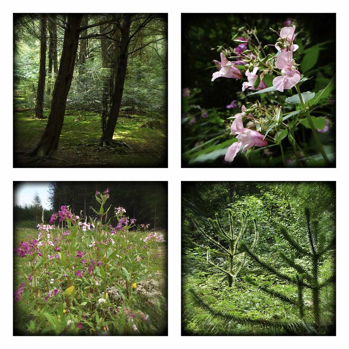 MAGIC FOREST XXIX
