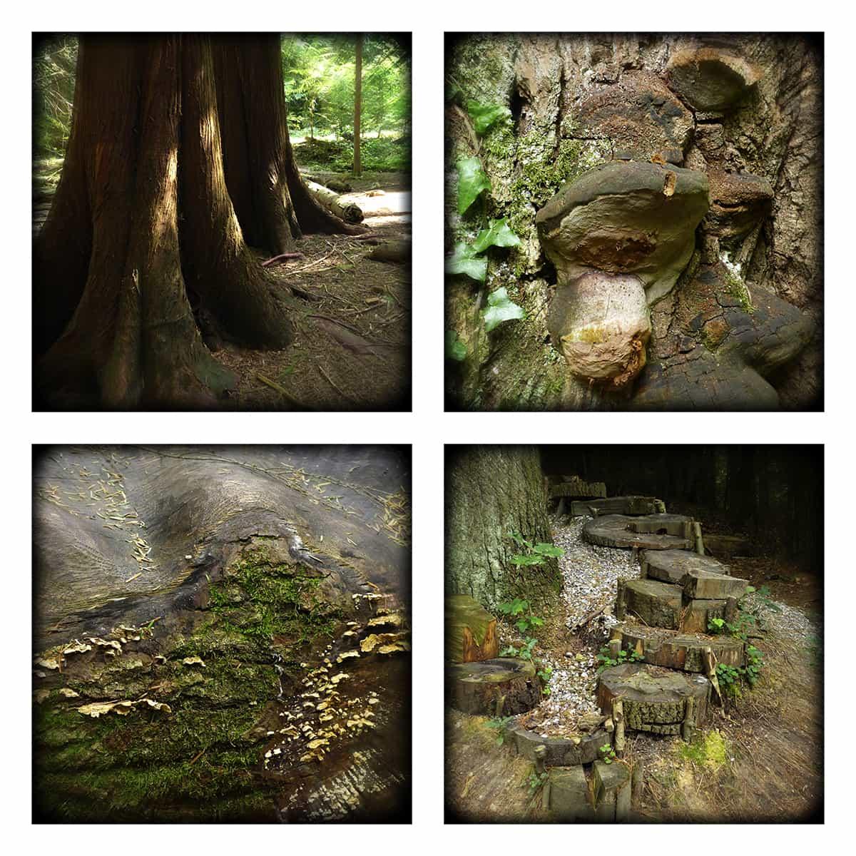 MAGIC FOREST XXXII