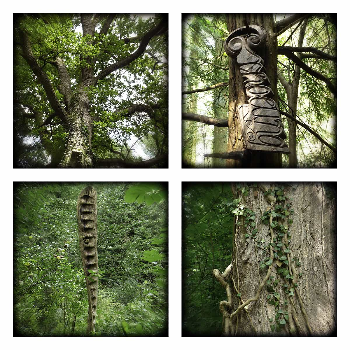 MAGIC FOREST XXXVI