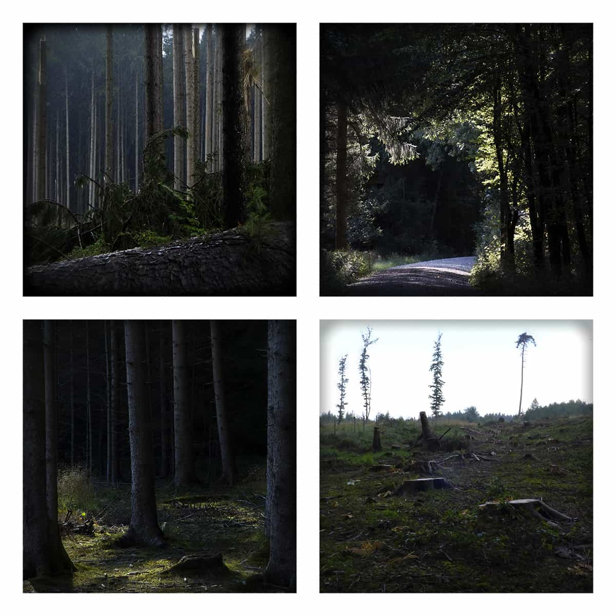 MAGIC FOREST XXXVIII