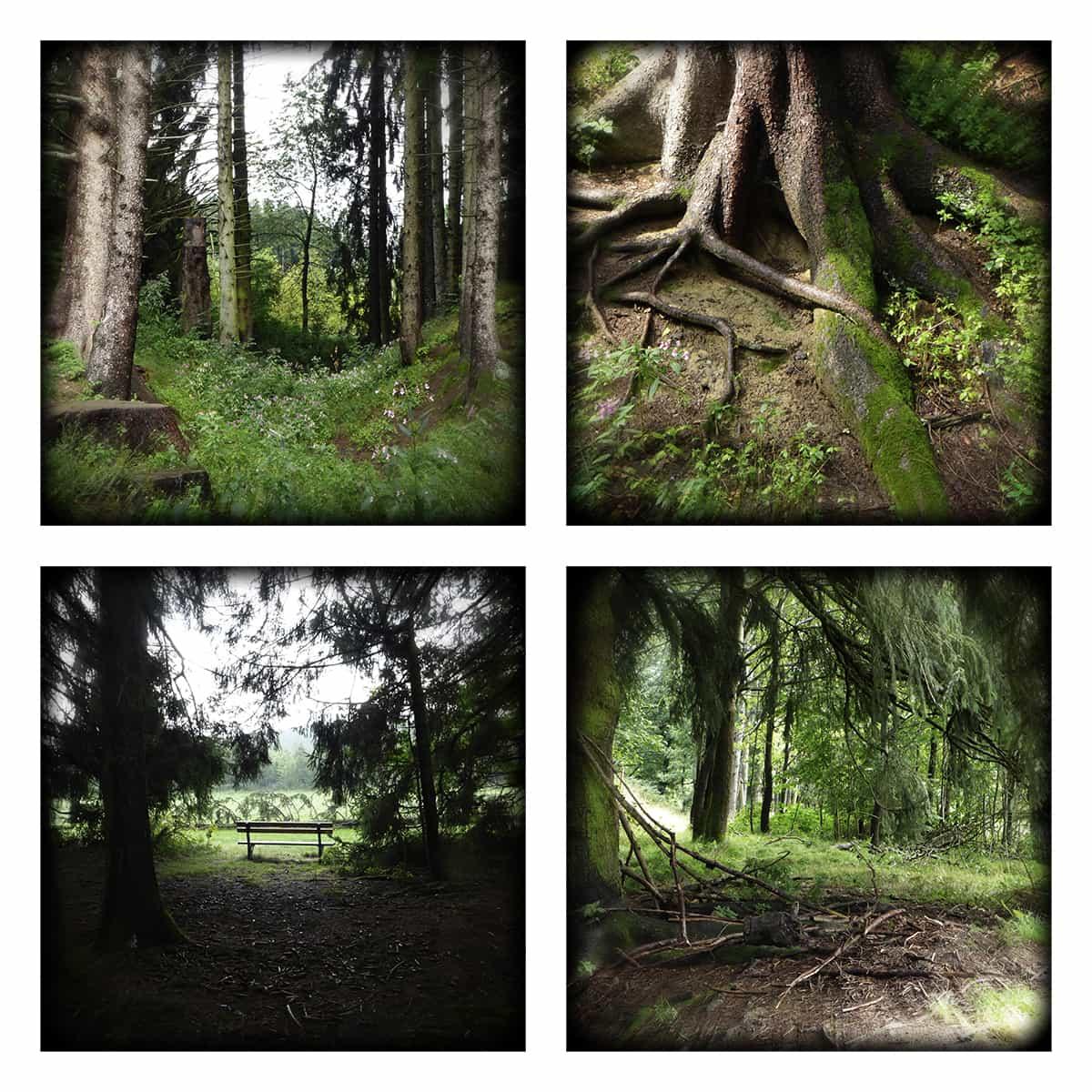 MAGIC FOREST XXXIX