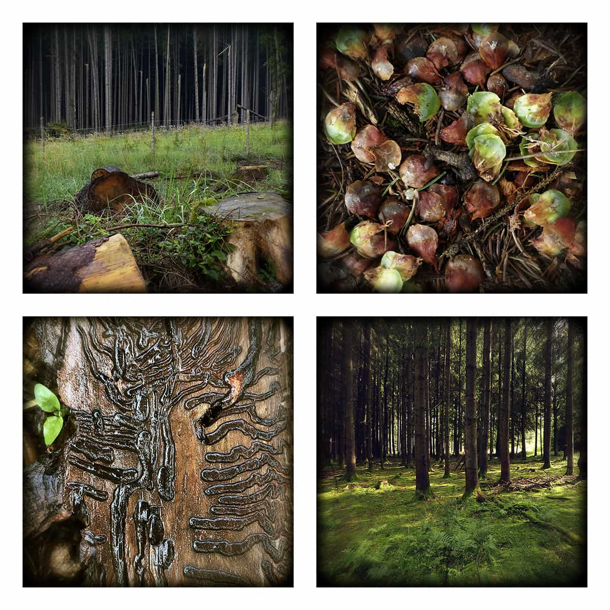 MAGIC FOREST XL