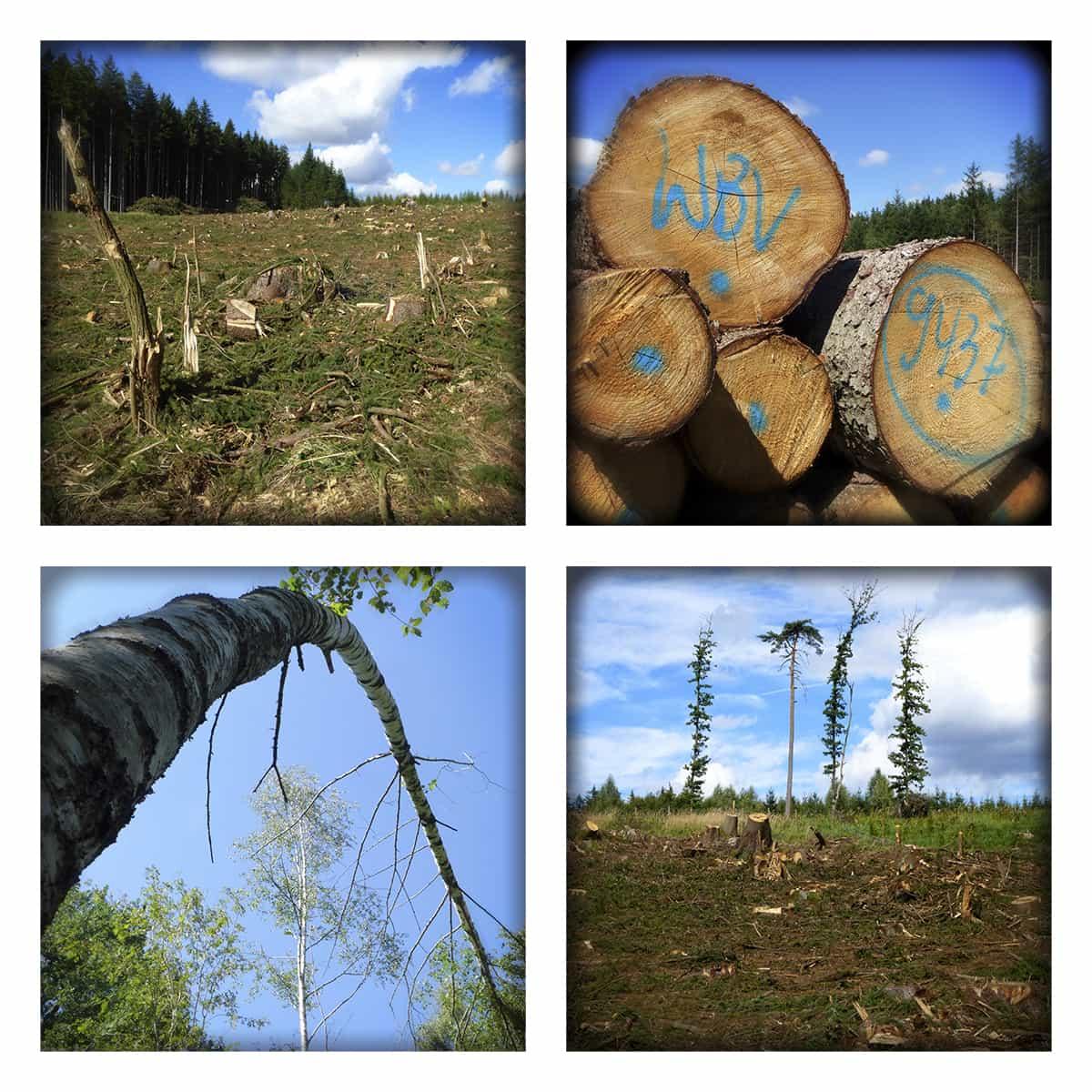 MAGIC FOREST XLII