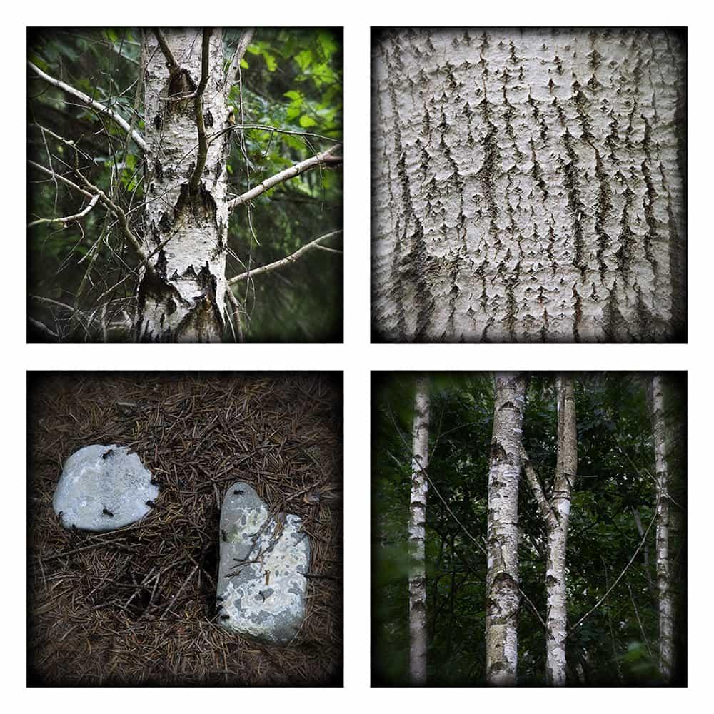 MAGIC FOREST V
