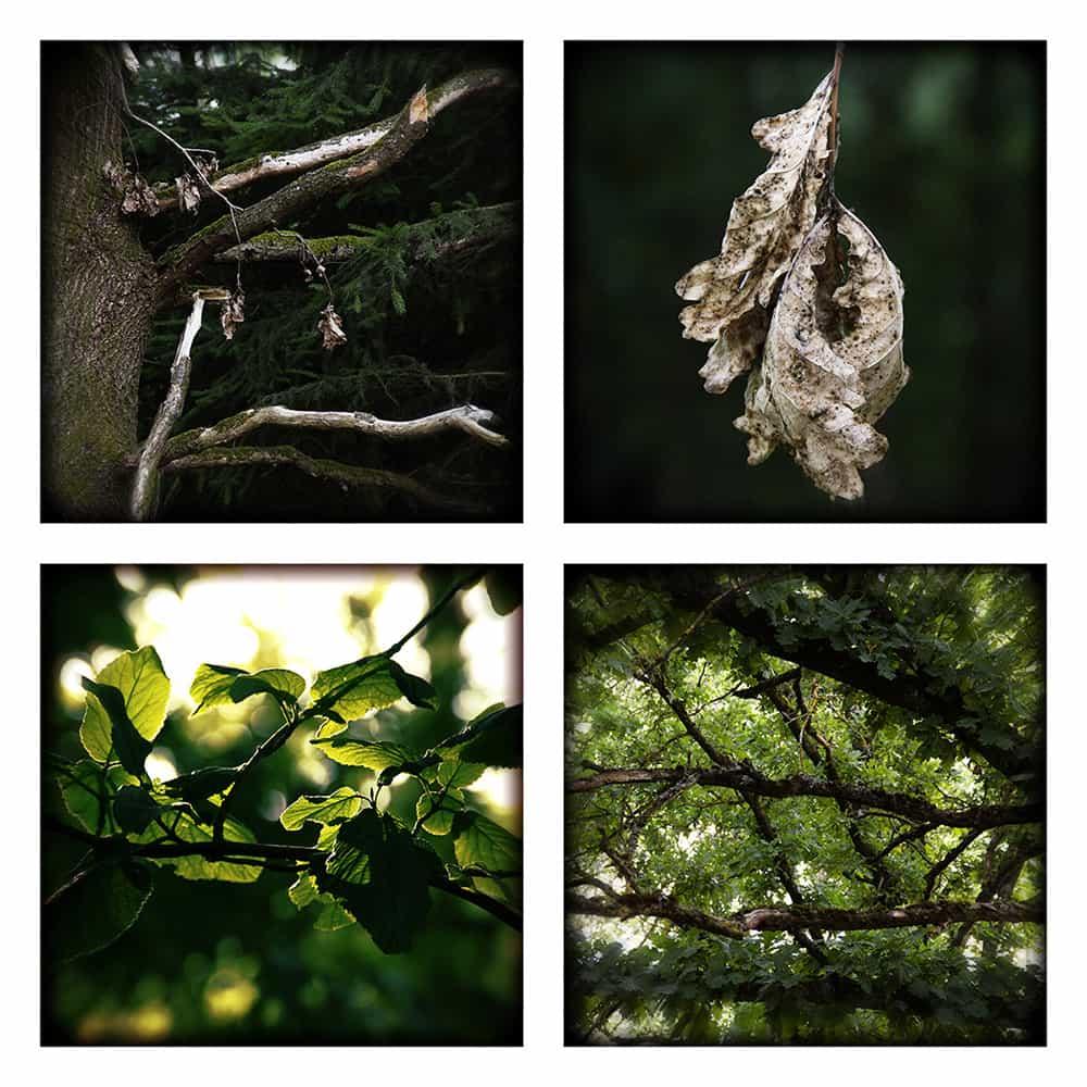 MAGIC FOREST VI