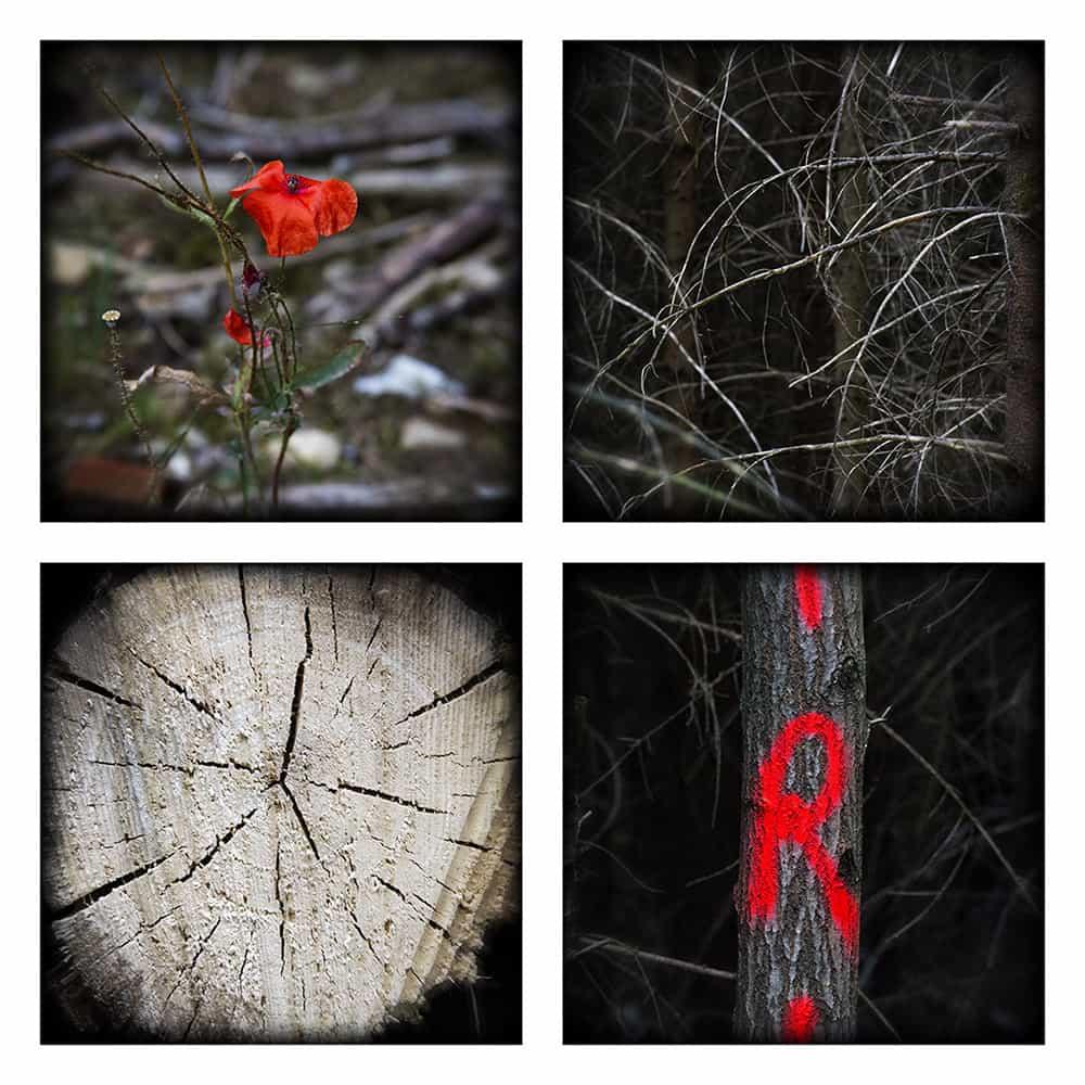 MAGIC FOREST VII