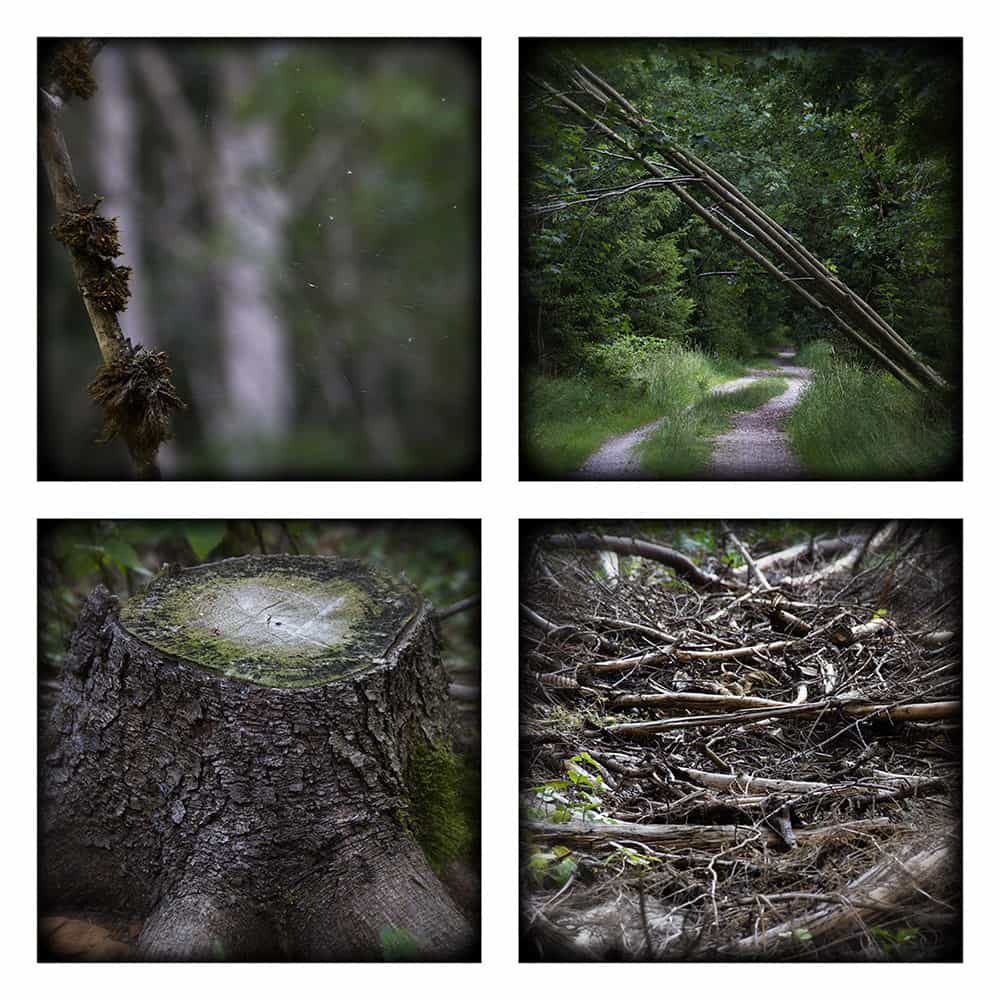 MAGIC FOREST VIII