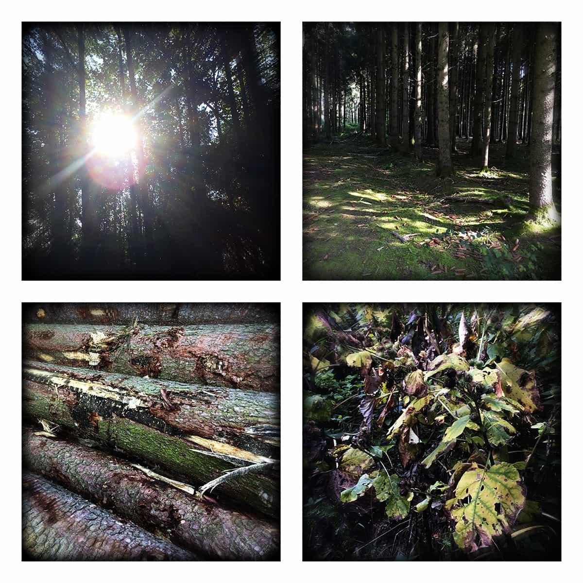 MAGIC FOREST XLIII