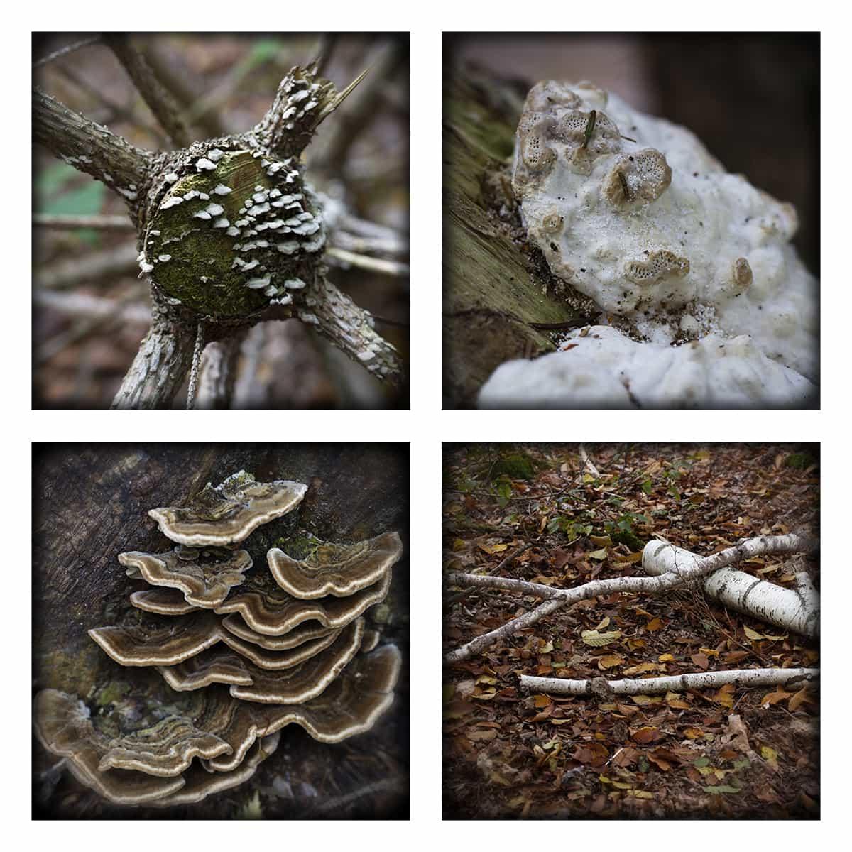 MAGIC FOREST XLIV
