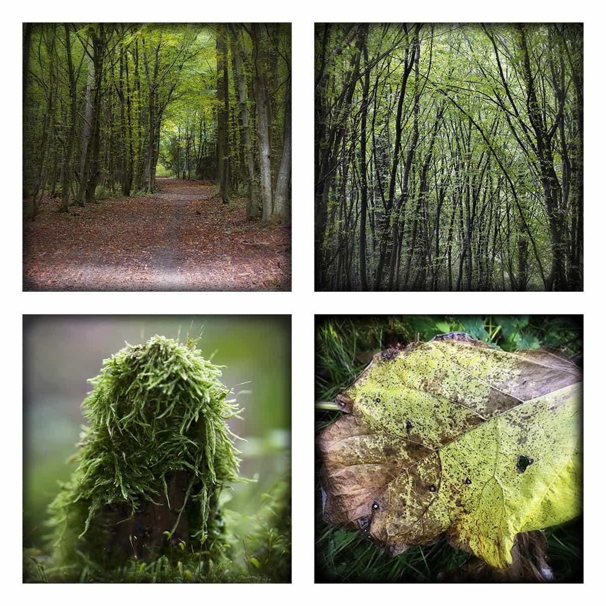 MAGIC FOREST XLVI