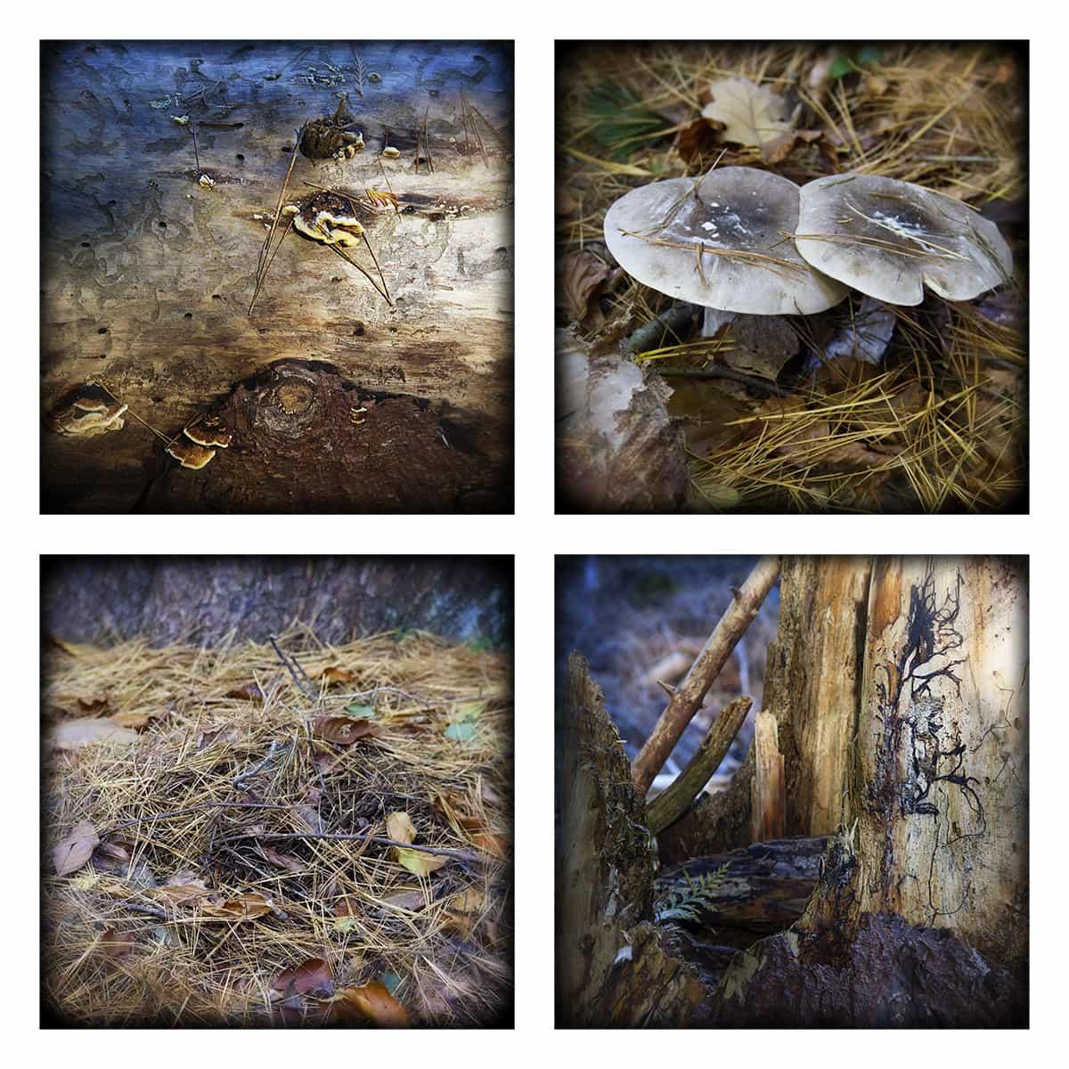 MAGIC FOREST L
