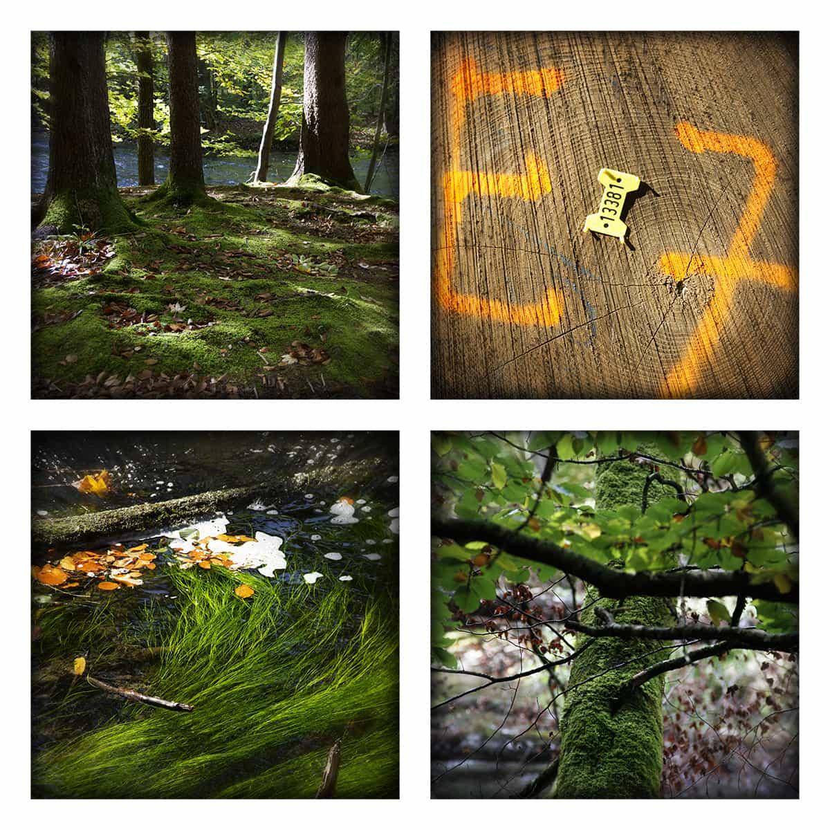 MAGIC FOREST LIII