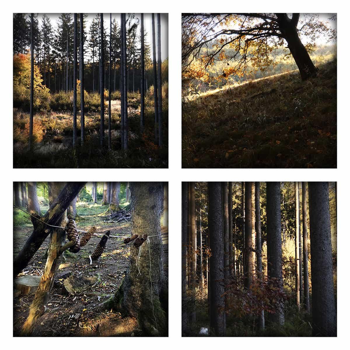 MAGIC FOREST LVI