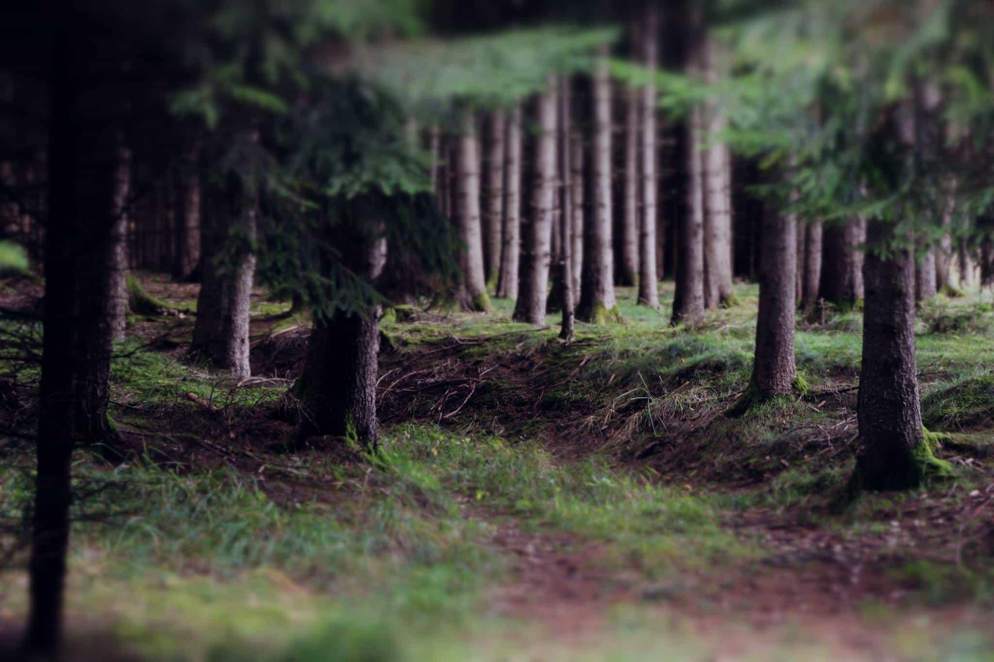 Miniaturwald