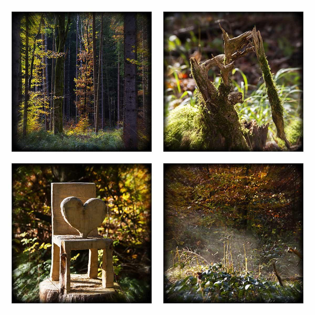 MAGIC FOREST LVII