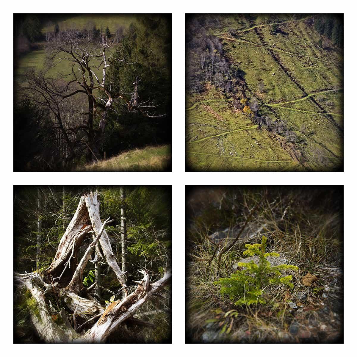 MAGIC FOREST LXVI