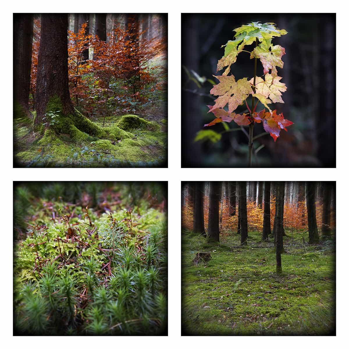 MAGIC FOREST LXVII