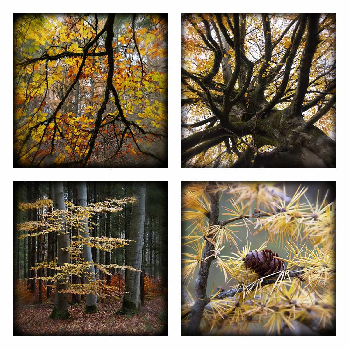 MAGIC FOREST LXIX