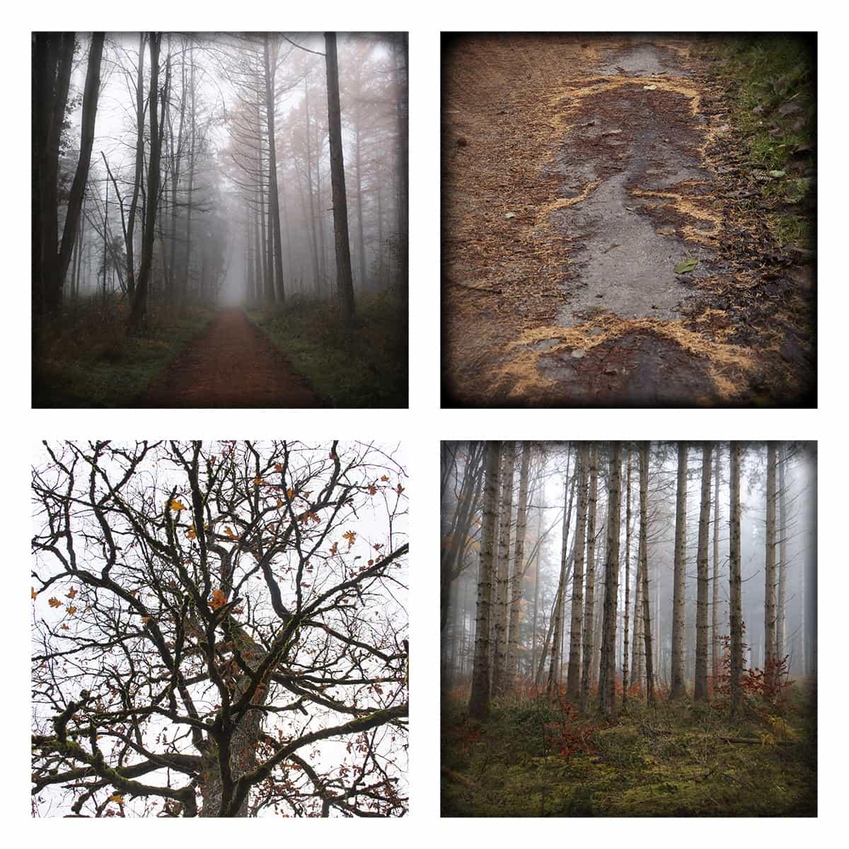 MAGIC FOREST LXX
