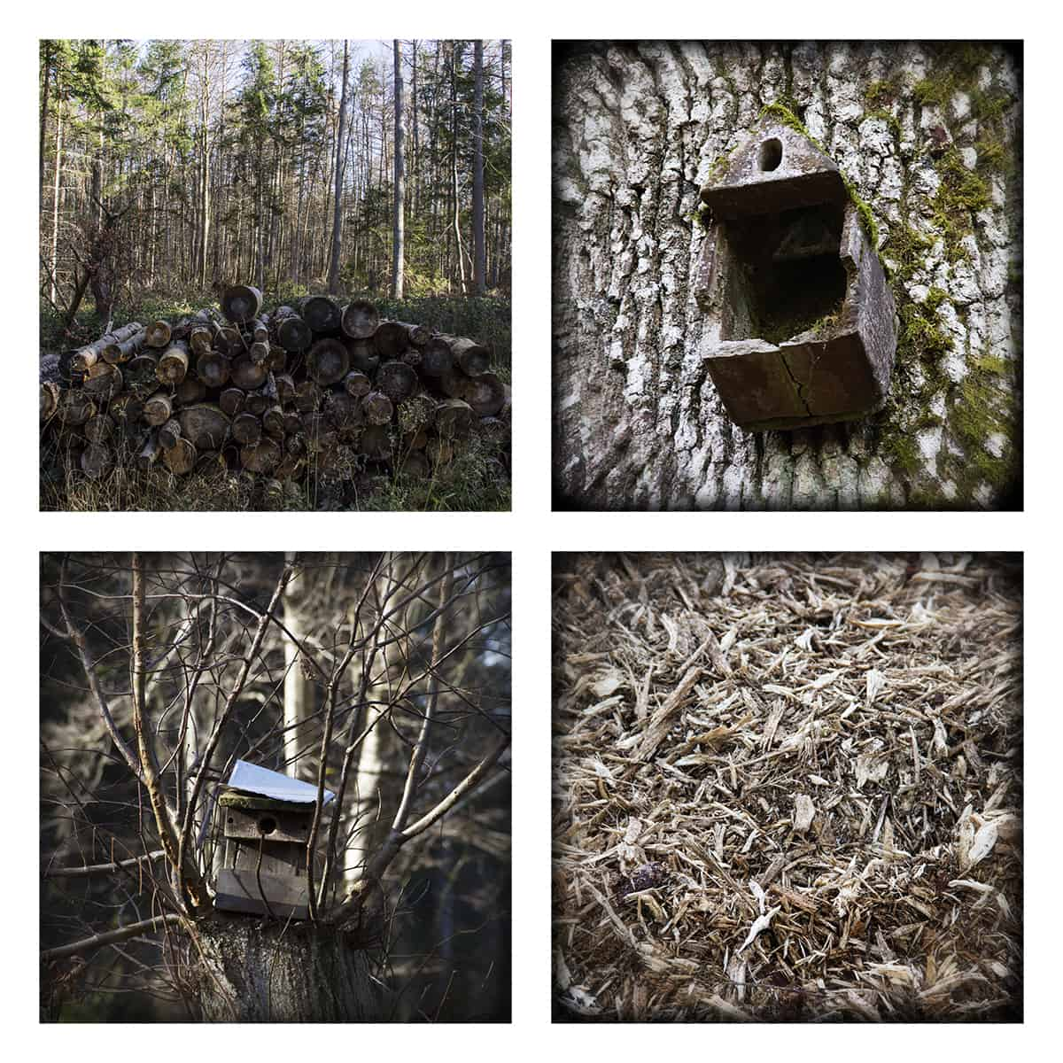 MAGIC FOREST LXXI