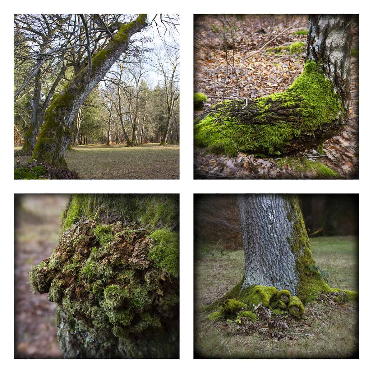 MAGIC FOREST LXXIII