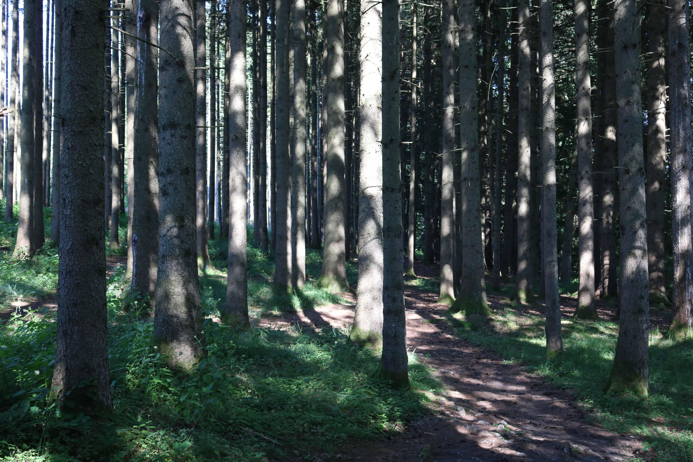Wald am Germeringer See