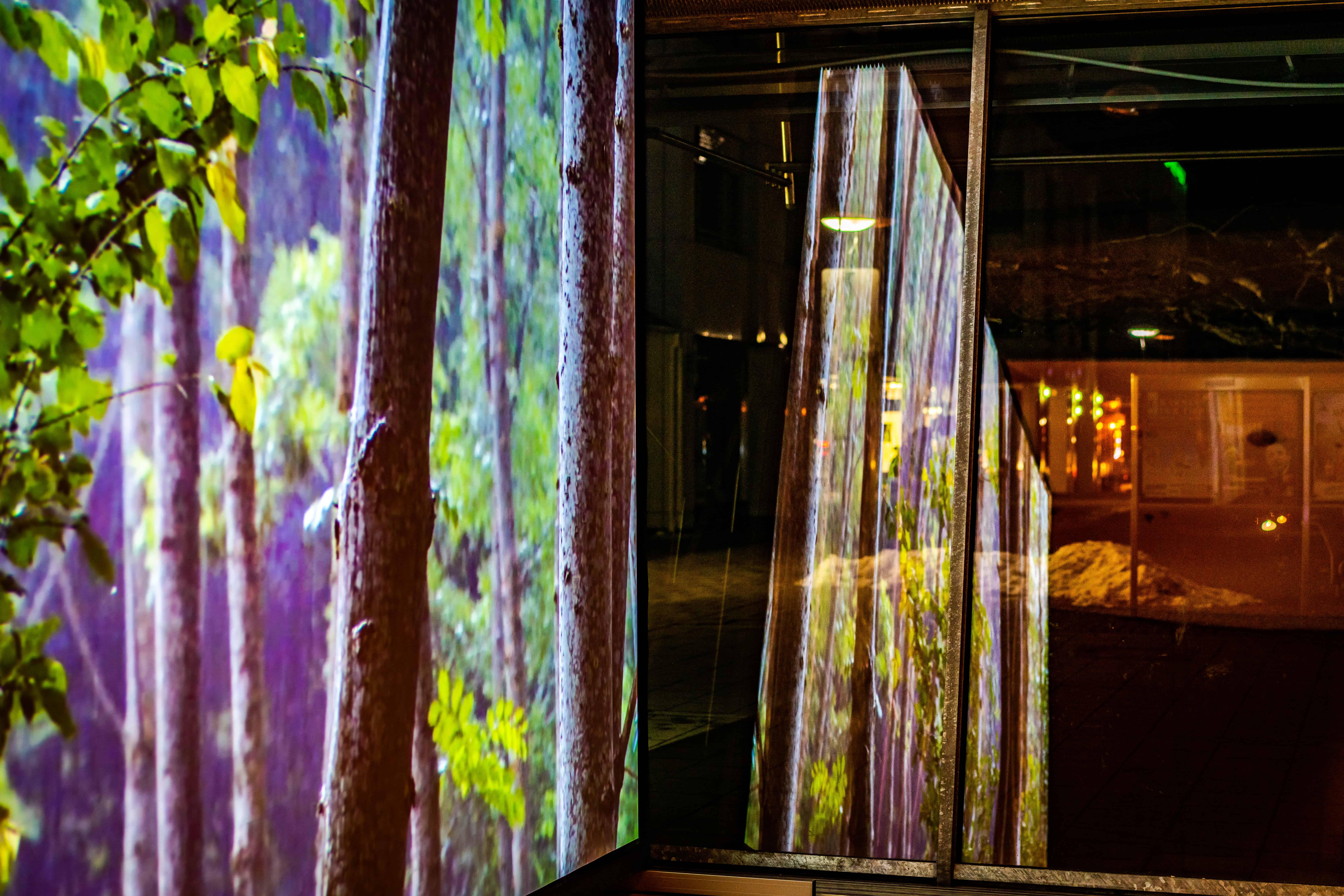Ausstellung Magic Forest