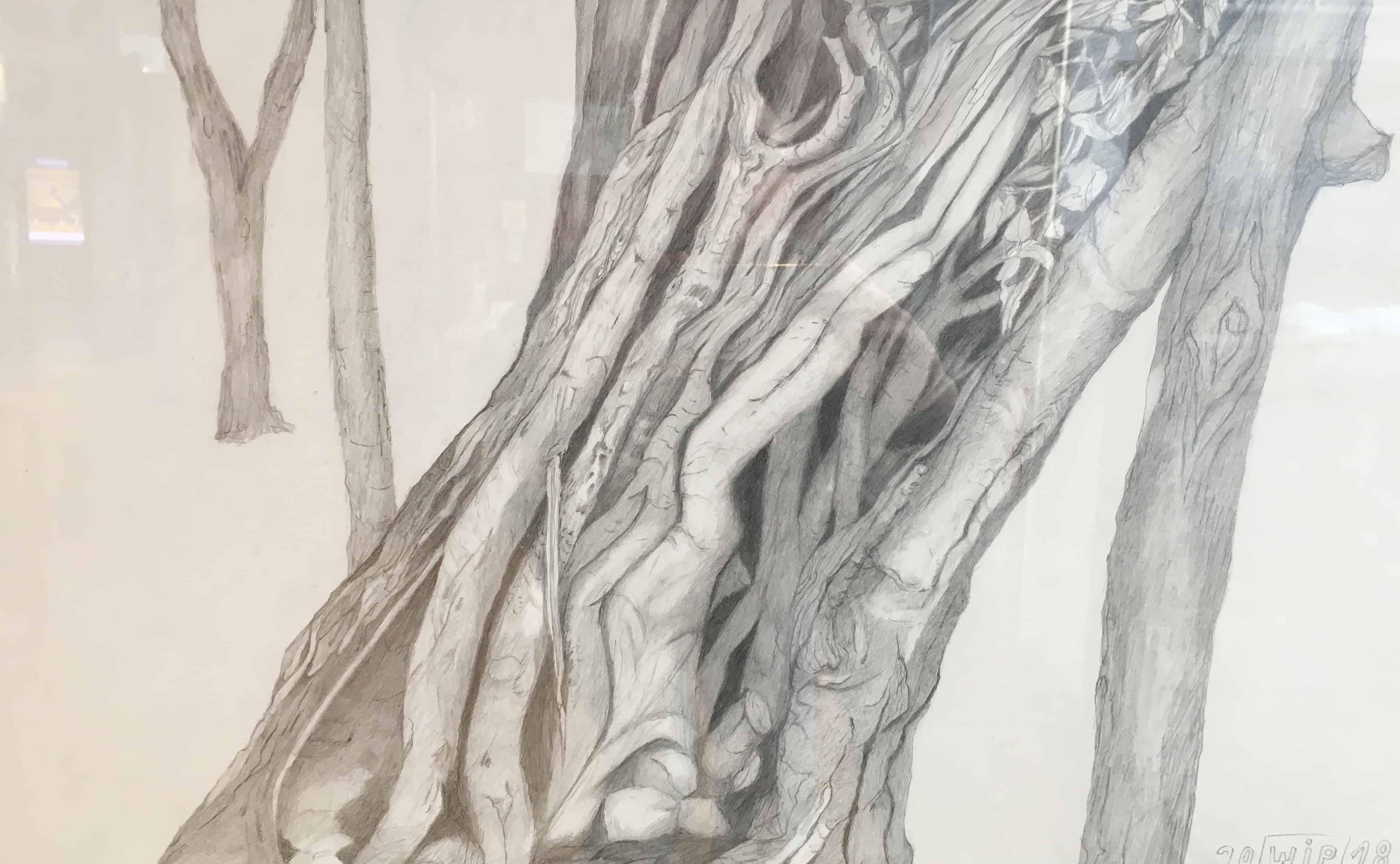 DIE GEHEIMNISVOLLEN BÄUME  Mystische Zeichnungen und Waldgeschenke von Irene Wührl-Petry