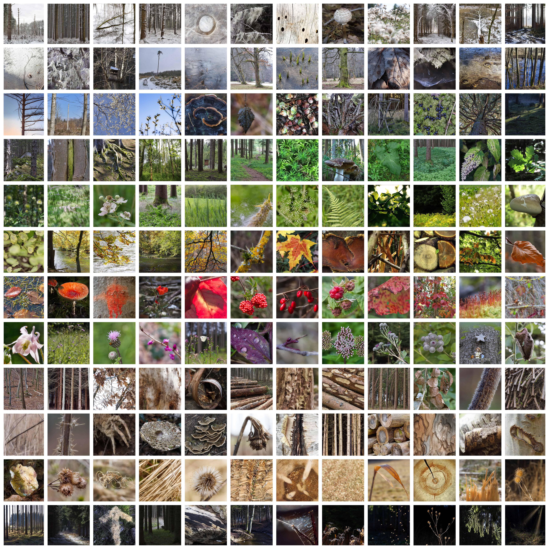 DIE FARBEN DES WALDES Foto-Collage von Vera Greif